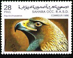 Sahrawi+1996+Birds+of+Prey+Portrait+stamp+-+Aquila+chrysaetos+28+ptas.jpg (1600×1275)