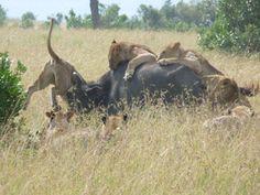 African Tours Adventure Safaris Kenya Budget Safari Tours