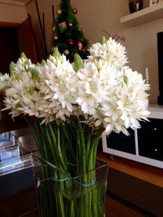 Estrella de Belen Plants, Home, Nativity Scenes, Stars, Ad Home, Plant, Homes, Haus, Planets
