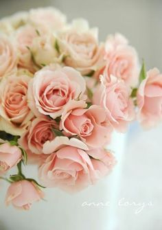 Spray Rose - Sweet Sara