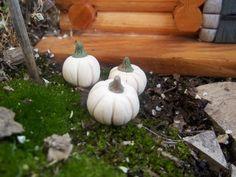 2 November 2012: Miniature Fairy Garden Pumpkin sold on eBay for £1.74