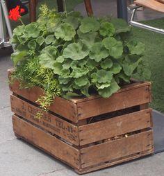 Houten krat met planten bij bistrotafeltje