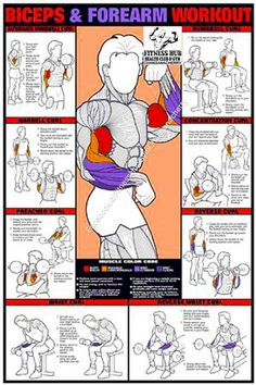 & Forearm Workout Fitness Chart (Co-Ed) Buy your Biceps & Forearm Workout Fitness Chart (Co-Ed) at !Buy your Biceps & Forearm Workout Fitness Chart (Co-Ed) at ! Body Fitness, Fitness Tips, Fitness Motivation, Health Fitness, Workout Fitness, Free Workout, Health Club, Wall Workout, Muscle Group Workout
