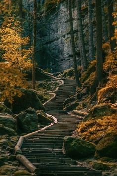 Dark Forest - Sächsische Schweiz, Germany (by on . so many steps, by the time you got to the top, you would have your troubles worked out in your mind. Beautiful World, Beautiful Places, Landscape Photography, Nature Photography, Germany Photography, Photography Ideas, Travel Photography, Dark Forest, Forest Path