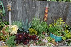 Beautiful succulent garden.  Far out Flora