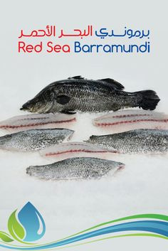 how to cook barramundi in pan