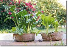 Urine: Closing the NPK Loop Permaculture Forums, Permaculture Courses, Permaculture Information & News