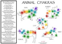 All animals benefit from Chakra Healing & Balancing