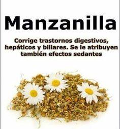 Planta medicinal y sus beneficios