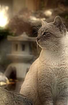 #japan #cat