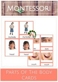 Montessori Parts Of The Body Cards – Montessori Nature