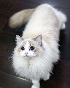 Excellent funny cats detail are offered on our web pages. Take a look and you will not be sorry you did. Cute Cats And Kittens, I Love Cats, Crazy Cats, Kittens Cutest, Pretty Cats, Beautiful Cats, Cute Baby Animals, Animals And Pets, Gato Grande