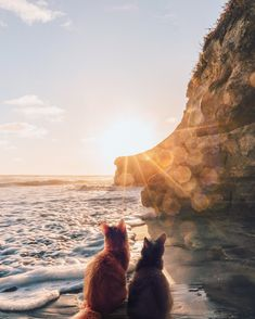Tika and Torin went on vacation without us, but at least they are sending some pictures 🤷♀🌅 Pet Insurance, Some Pictures, Your Pet, At Least, To Go, Vacation, Pets, Vip, Benefit