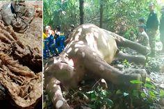 Elefante morto encontrado com o estômago cheio de sacos plásticos e outros objetos - GreenMe.com.br Lion Sculpture, Horses, Statue, Thailand, Animals, Blog, Natural Resources, Sea Creatures, Loom Animals