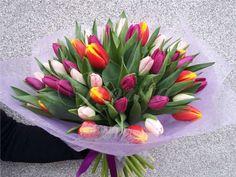 Kytice z 50 tulipánů Plants, Plant, Planets