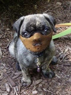 Hannibal Lecter Puppy.  awwww. so wrong. but so funny! lol