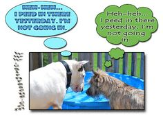 Col. Potter Cairn Rescue Network: Wacky Wednesday!  Who peed in the pool?