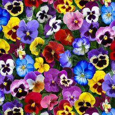 Lovely Pansies Floral Multi Elizabeth's Studio Fabric #6933 By the Yard #ElizabethsStudio