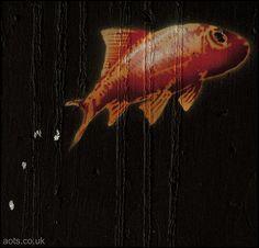 Banksy goldfish
