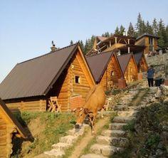 Good morning everyone (cows counted)!: @albion__ber  #kosovo #ruova #kosova #rugove #nature #animal #village #peja