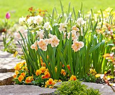 Spark a riot of color in your spring garden and find strength in numbers with these made-for-each-other planting companions: http://www.bhg.com/gardening/flowers/perennials/spring-planting-partners/?socsrc=bhgpin033015springgala&page=4