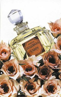 It's during a stay at the edge of the lake Como, that Ernest Daltroff was charmed by the purity of the BELLAGIO gardens. He dedicated to this town the first Carnation fragrance of Caron, that he named BELLODGIA.