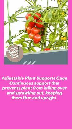 #TurmericVitamins Turmeric Vitamins, Plant Supports, Garden Art, Cage, Herbs, Plants, Gardening, Lawn And Garden, Herb