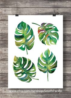 Items similar to Watercolor Monstera leaves Printable art Fruit salad plant swiss cheese plant tropical leaf botanical illustration greenery print on Etsy Illustration Botanique, Plant Illustration, Botanical Illustration, Watercolor Illustration, Watercolor Fruit, Watercolor Leaves, Watercolor Paintings, Plant Painting, Plant Art