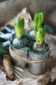 Bulbs Scandi Decor - welcome January with hyacinth bulbs Christmas Flowers, Natural Christmas, Noel Christmas, Christmas And New Year, Winter Christmas, Christmas Crafts, Spring Bulbs, Deco Floral, Scandinavian Christmas