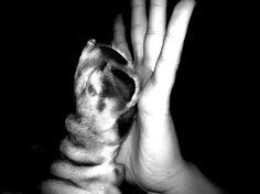 High five! Best friends..my dog bassethound!