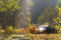 Deux amours - la voiture et la nature. De laatste wint?
