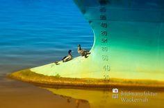 nice Fotografie »Entenpause auf'm Schiff«,