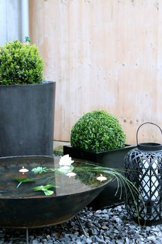 Contemporary patio pond   Container water garden ideas & pond plants for containers