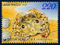 Nature of Baengnyeongdo, Orithyia sinica, marine life, yellow, blue, 2006 1 18, 백령도의 자연, 2006년 1월 18일, 2473, 범게, postage 우표