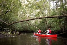 The South's Best Swimming Holes and Waterfalls: Edisto River Through Aiken State Park