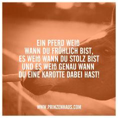 www.prinzenhaus.com EIN PFERD WEIß WANN DU FRÖHLICH BIST, UND ES WEIß GENAU WANN DU EINE KAROTTE DABEI HAST!