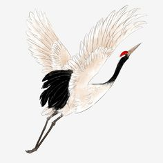 Crane Drawing, Wall Drawing, Japanese Crane, Japanese Art, Crane Tattoo, White Crane, Crane Bird, Black And White Posters, Chinese Landscape