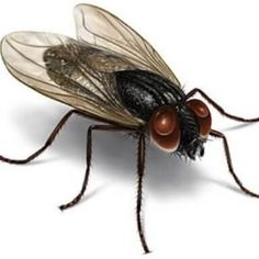 if you want to recieve best pest control services in abu dhabi to get rid of pests,call mazaya company in abu dhabi quickly we have many services in pest control in abu dhabi Best Pest Control, Pest Control Services, Bug Control, Flea Spray, Types Of Insects, Pest Solutions, Insect Pest, Pest Management, Fly Traps