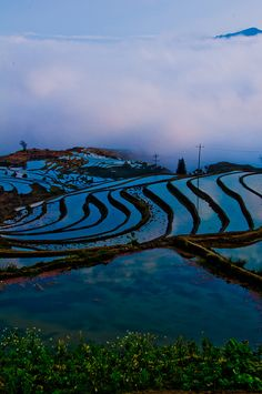 If you lay in one of those patties, you might feel like you were lost in blue . . . besides the fact of cold water seeping through your clothes and mud going in your ears and plants going down your shirt.  : P  Terraced rice fields, Kunming, China