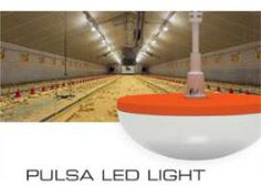 New cost saving LED light for poultry houses  For More Details: http://www.agribazaar.co/index.php?page=item&id=2293