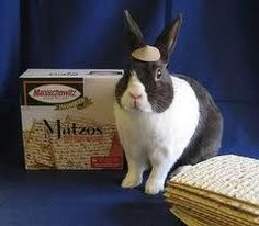 Passover Bunny