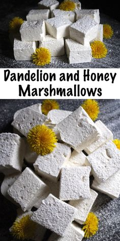Dandelion and Honey Marshmallows ~ These homemade marshmallows are made without corn syrup and flavored with dandelion petals for a unique herbal treat. The kids will love this honey flavored wild foraged treat! Candy Recipes, Real Food Recipes, Dessert Recipes, Cooking Recipes, Yummy Food, Desserts, Fudge Recipes, Dandelion Recipes, Table D Hote