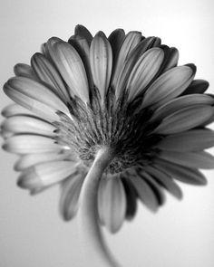 Beautiful black & white flower.