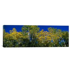 """East Urban Home Panoramic 'Colorado' Photographic Print on Canvas Size: 16"""" H x 48"""" W x 1.5"""" D"""