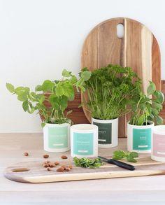 Søstrene Grene, leuke potjes om kruiden in te kweken. #sostrenegrene #herbs #pastel