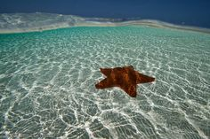 Starfish by Susanna Girolamo, via Flickr