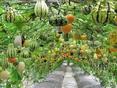 A hanging Garden - Local Healthy Sustainability by I support Farmers Markets