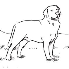 Top 30 Free Printable Puppy Coloring Pages Online Dog Learning