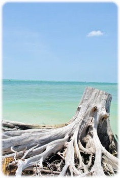 Naples, Florida...I have never seen water this clear or beautiful anywhere else!