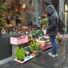 En la Floristeria Jardín de Paula (situada en la Torre Nueva 30, justo al lado de la Plaza San Felipe y la Calle Alfonso) encontraras arreglos florales especiales y personalizados, asi como una amplia oferta de planta y flor cortada.